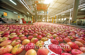 Dried Apple Factory & Workshop